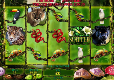 Play Amazon Wild | Online Slots | Casino.com ZA
